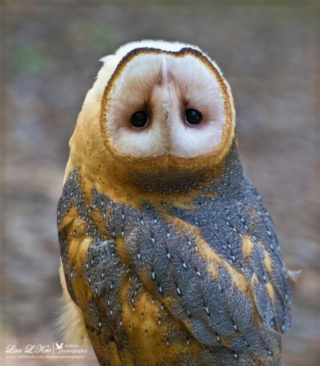 Owl-turns-its-head-upside-down-e1367421485715-634x725