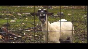 goatlucky