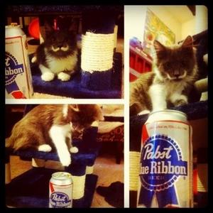 small_hamilton the hipster cat2