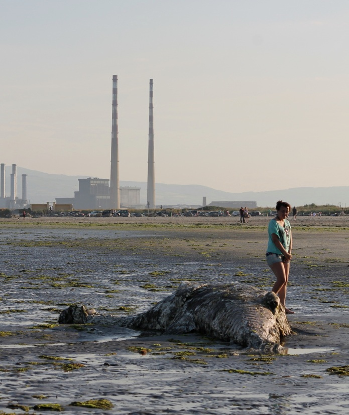 dollymount4