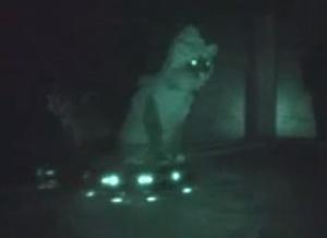 roombacat