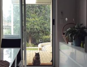 cat door fun y