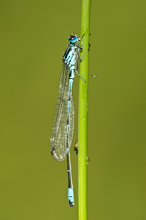 Damselfly-by-Tony-Flashman-02