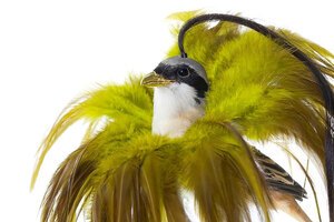 avian-architecture-and-bird-hairdos-by-karley-feaver-designboom-07