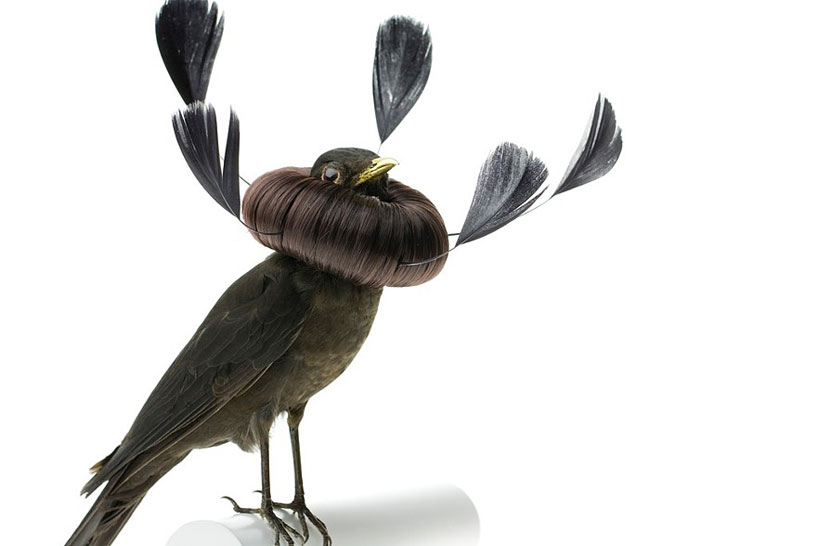 avian-architecture-and-bird-hairdos-by-karley-feaver-designboom-14