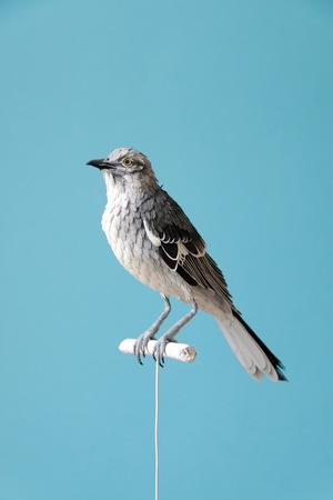 birds-5
