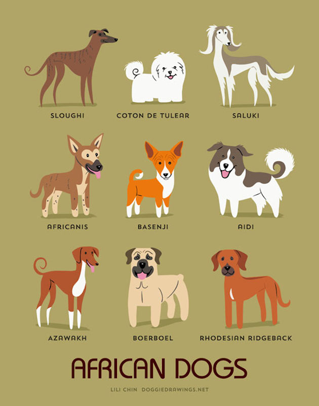 Illustrated-Guide-to-Dogs-of-the-World-1