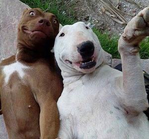 animals-taking-selfies16