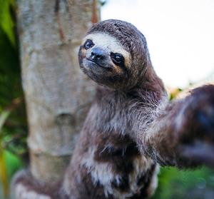 animals-taking-selfies19