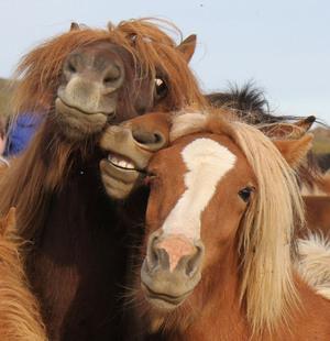 animals-taking-selfies3
