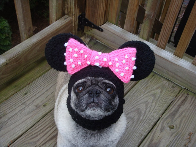 silly-hat-pug12