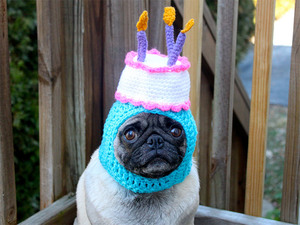silly-hat-pug17