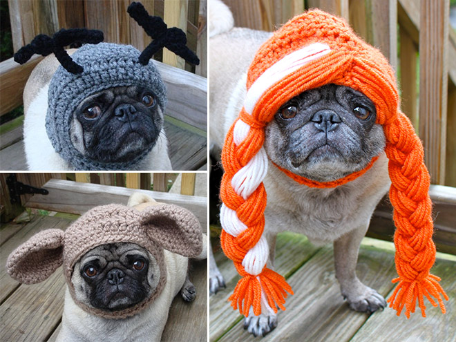 silly-hat-pug8