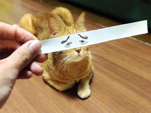 anime-cat13