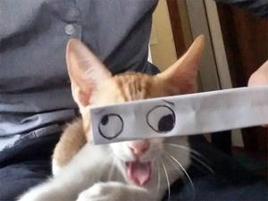 anime-cat14