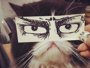 anime-cat16