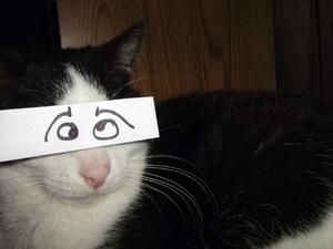 anime-cat3