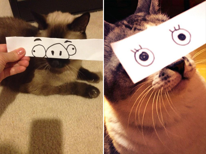 anime-cat5