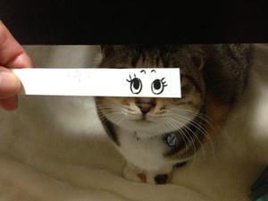 anime-cat8