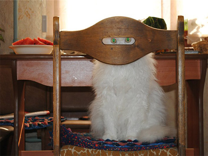 cat-ninja1