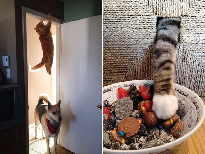 cat-ninja10