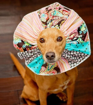 creative-pet-cones-elizabethan-collars-18__605
