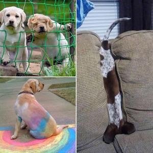 unlucky-dog10