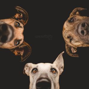 expressive-dog-portraits-elke-vogelsang-7