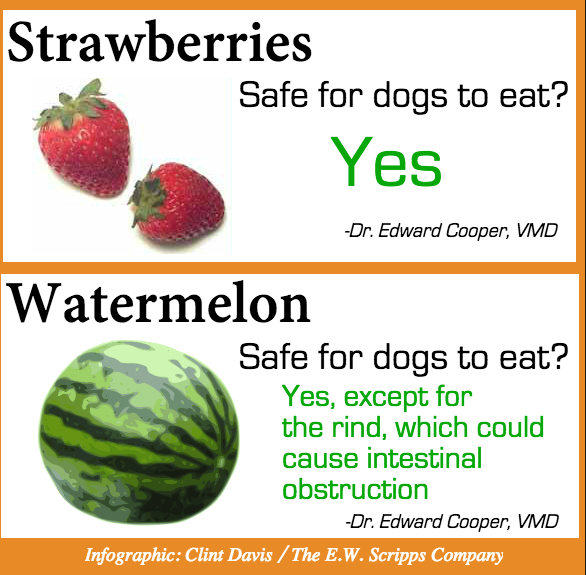 what fruits can dogs eat fruit bowl