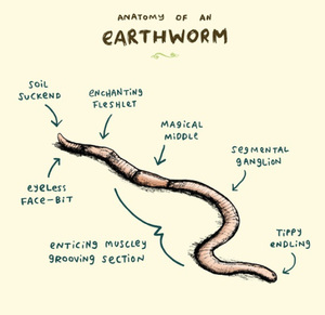 Earthworm Dissection Lab Answers