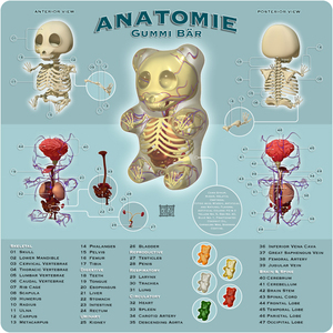 Anatomie_Gummi_Bar_by_freeny