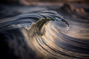 WarrenKeelan_SeaSnake