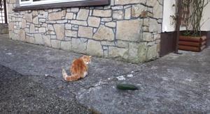 catat:cucumber