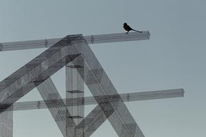 edoardo-tresoldi-wire-mesh-installation-gargano-puglia-designboom-06
