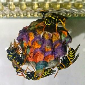 wasp-4