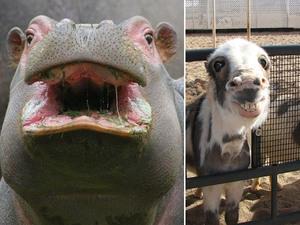 lol-animals2