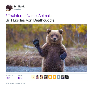 animal10