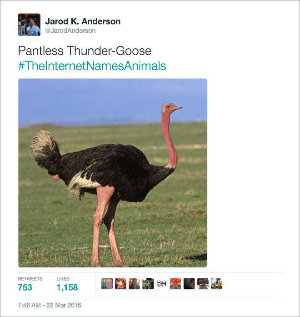 animal16