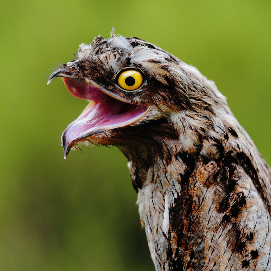 funny-bird5