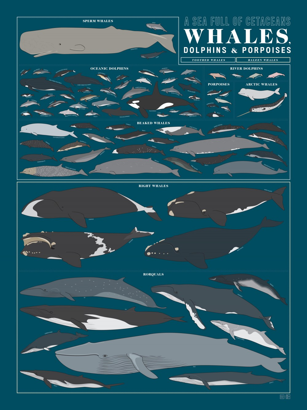 whales_dolphines_and_porpoises