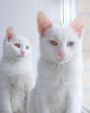 TwinCats3