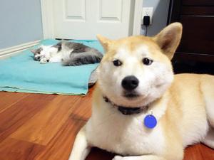 dog-bed2