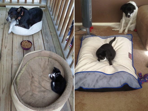 dog-bed4