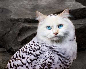 owl-cat5