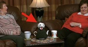Knitting Pattern For Michael D Higgins Tea Cosy : Michael Tea Cosy Broadsheet.ie