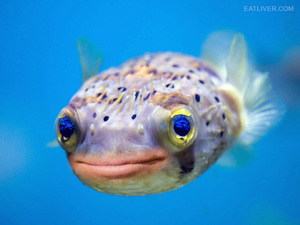 puffer fish with donald trump s mouth broadsheet ie