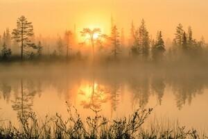 Misty summer landscape