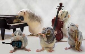 Rat-Band-01-634x406