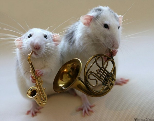 Rat-Band-02-634x498