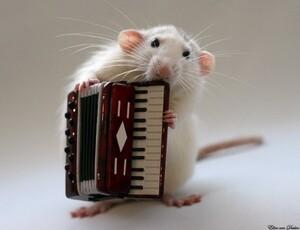 Rat-Band-04-634x487